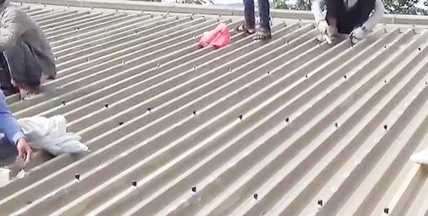 đội ngũ nhân viên thợ sửa nhà mái tôn tay nghề cao